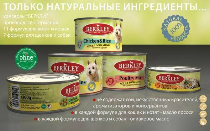 Влажный (жидкий) корм для кошек: какой самый лучший по отзывам ветеринаров, виды (желе, консервы, прочее) и состав в зависимости от класса