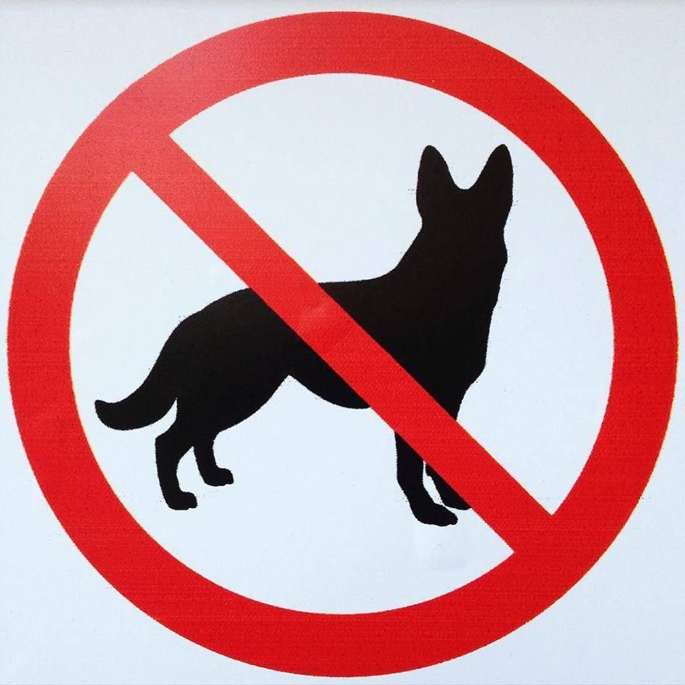 Можно ли с собакой заходить в магазин: тонкости законодательства