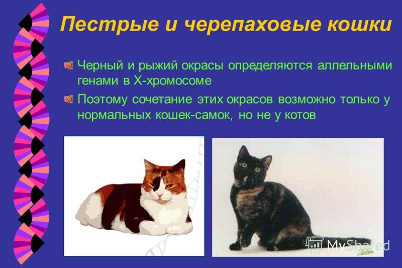 Генетика кошек – зачем делать днк-тест и к чему быть готовым? | hill's pet