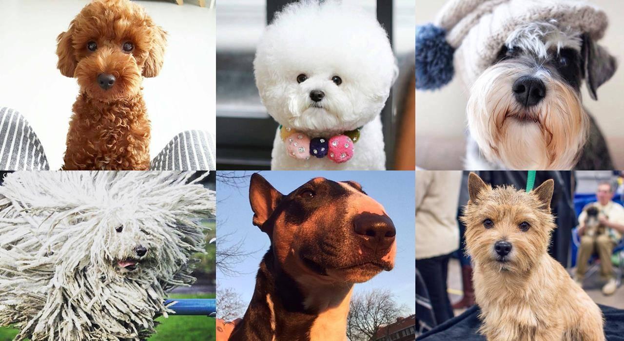 Собаки для людей с аллергией