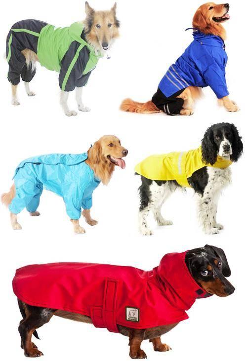 Выкройка дождевика для собаки своими руками: комбинезон с застёжкой по спине