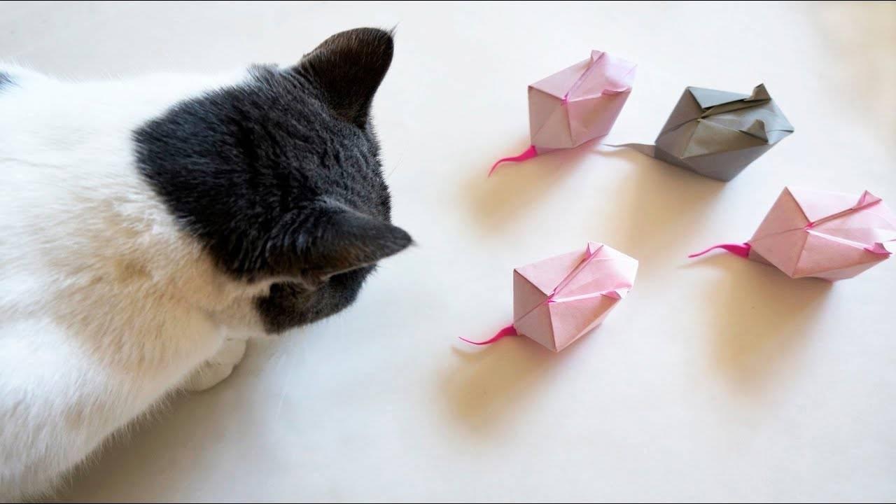 Игры с кошкой - почему они любят играть, список игрушек для животного   beauty-line14a.ru