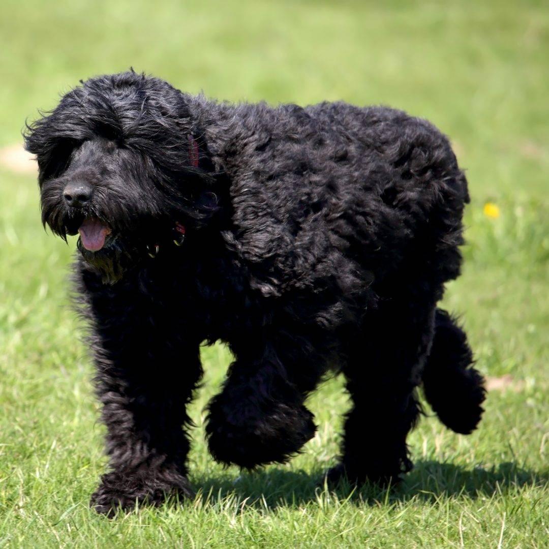 Какие породы собак были выведены в россии - gafki.ru