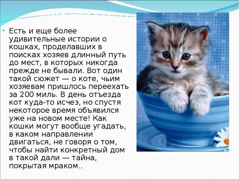 7 ошибок хозяина, которые сокращают жизнь питомцу - gafki.ru