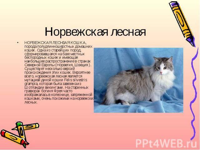 Основные повадки кошек: как понять, чего хочет питомец?