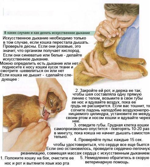 Собака часто дышит: это опасный признак или все в границах нормы?