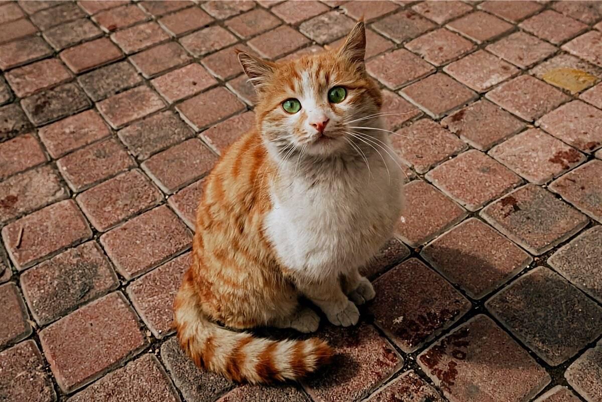 7 причин, почему беспородная кошка лучше породистой