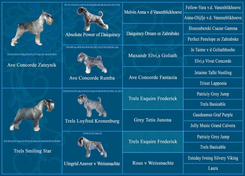 Шнауцеры: все представители породы с фото и описанием