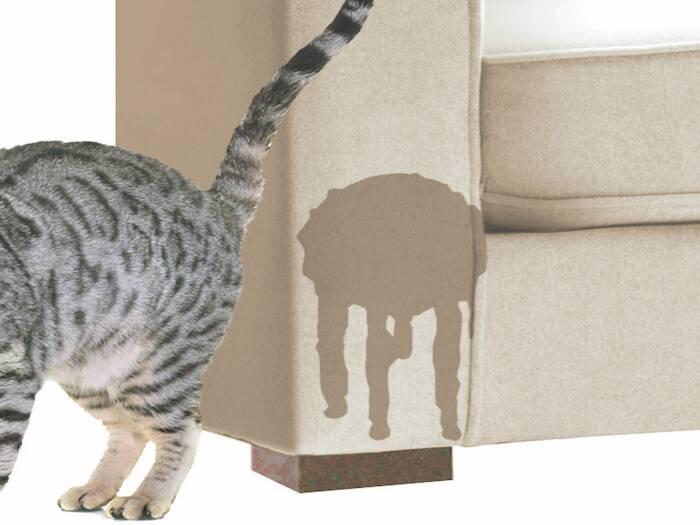 Как отучить кота метить территорию: причины и меток и методы отучения