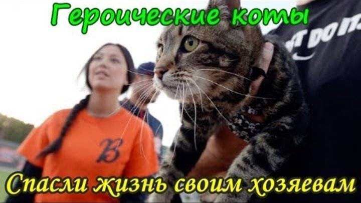Коты, спасшие жизнь своим хозяевам - gafki.ru