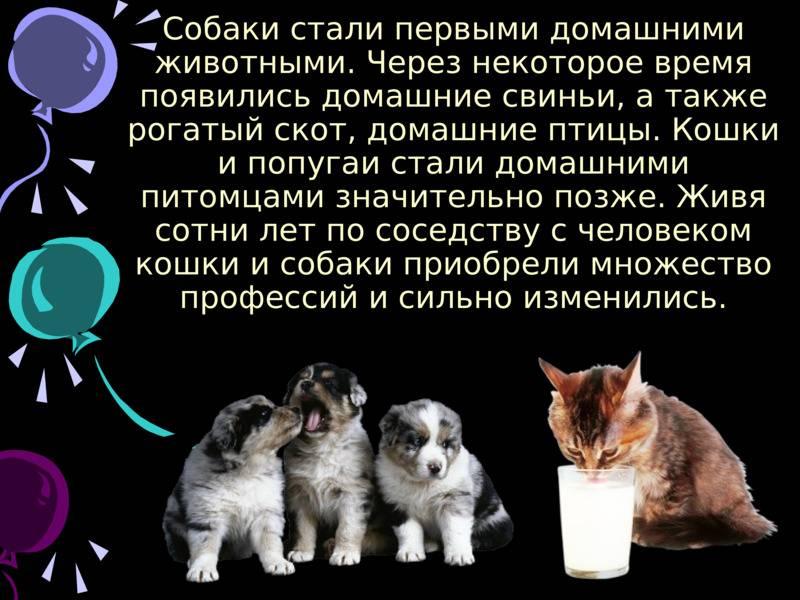 Одна территория: как подружить двух котов в доме
