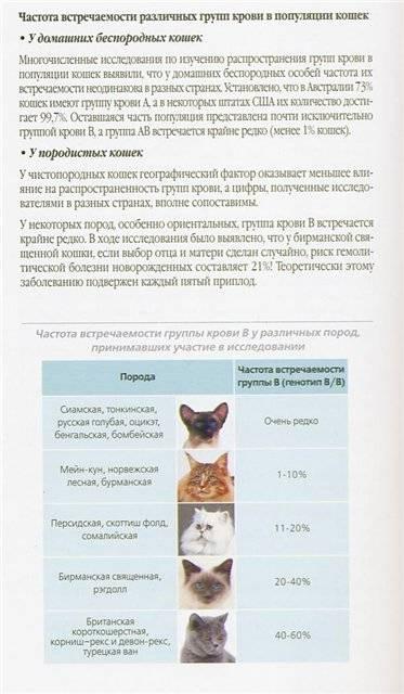 Как организовать бизнес по разведению котят?