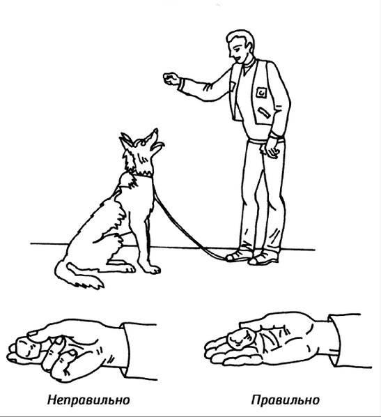 Дворняга (собака): описание, уход, воспитание