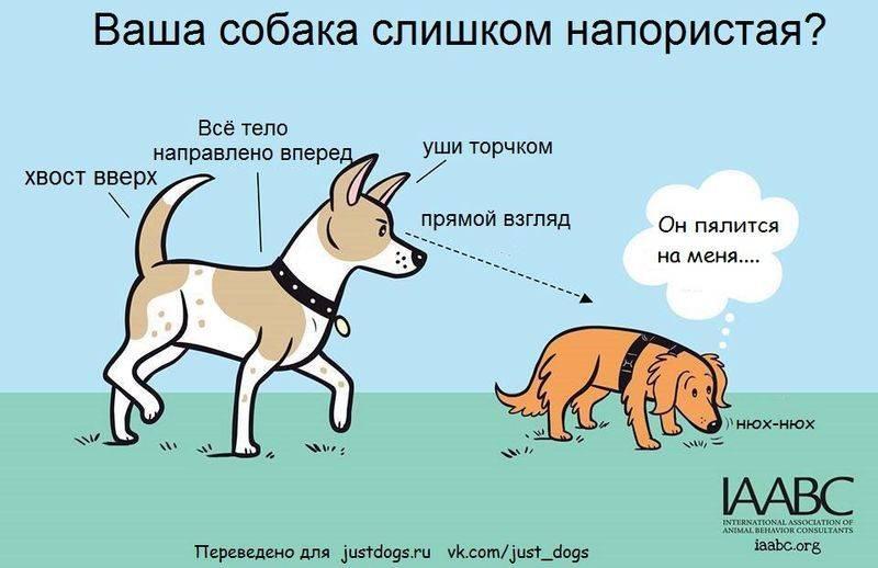 «щенячье поведение» или почему собака писается от радости? - gafki.ru