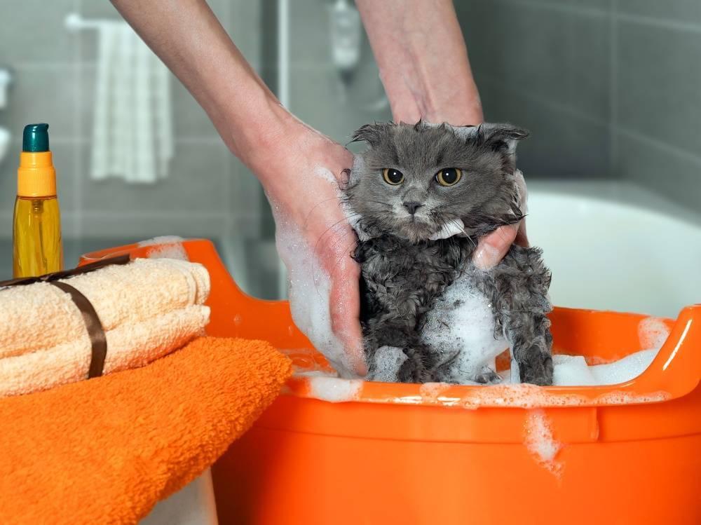 Почему кошки боятся воды - причины и как приучить купаться - kotiko.ru