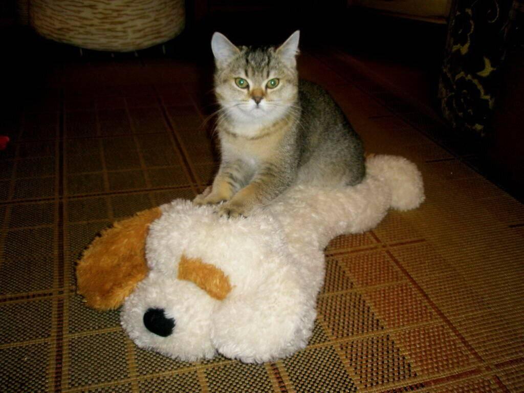 Когда кошки довольны, они мнут лапами. так ли это?