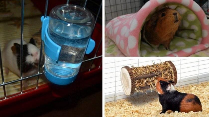 Маленькие хомячки (новорождённые детёныши хомяков): как ухаживать, чем кормить, когда можно отдавать