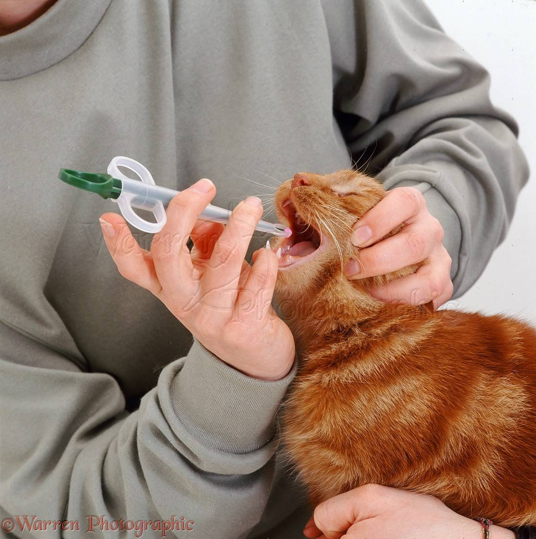 Как кошке или коту дать таблетку: эффективные и безопасные способы, таблеткодаватель, полезные фото и видео