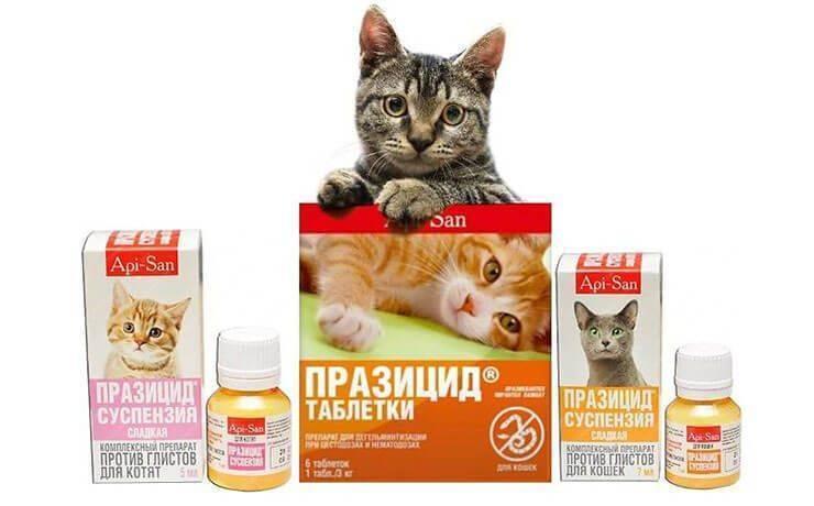 Дирофен (таблетки) для котят, кошек, щенков, собак | отзывы о применении препаратов для животных от ветеринаров и заводчиков