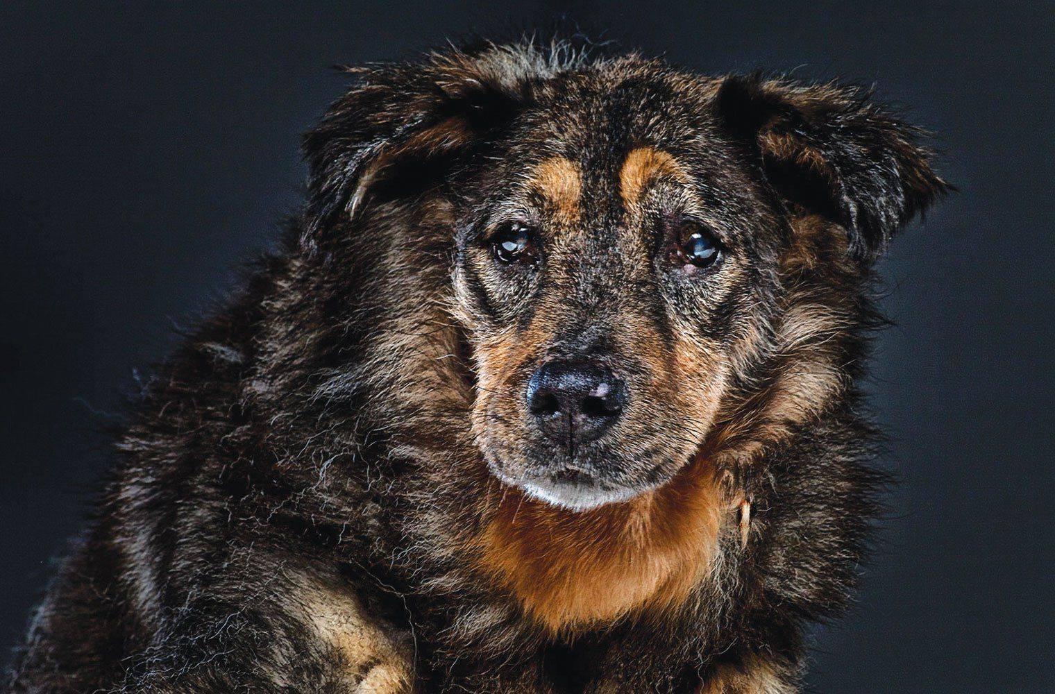 Собаки долгожители: список пород