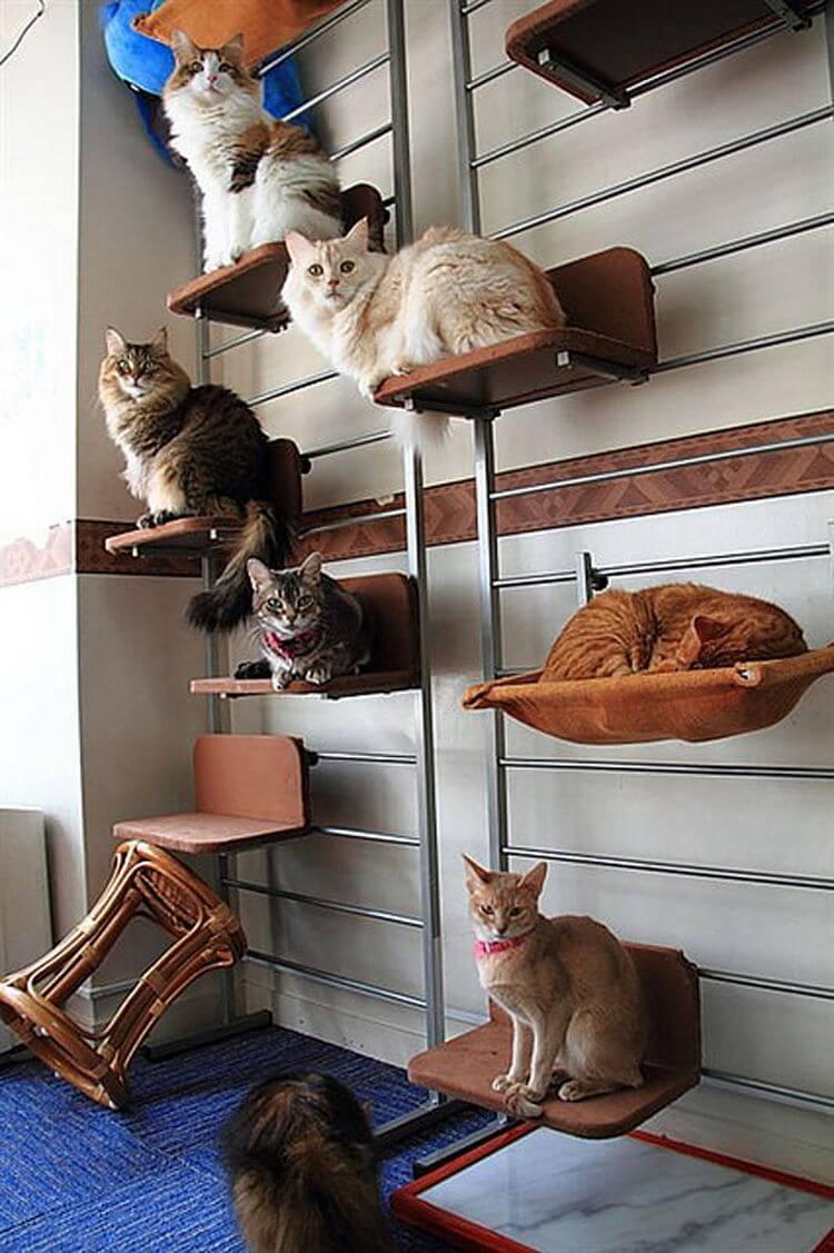 Лучшие породы кошек для содержания в квартире. лучшие породы кошек для дома и детей