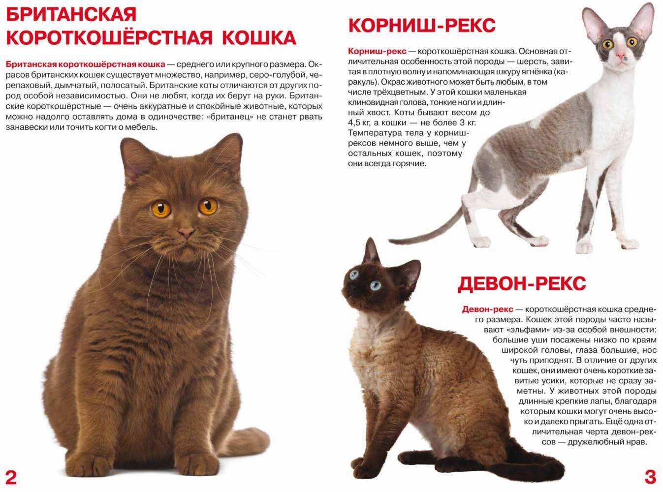 Топ 10 гладкошерстных пород кошек — список, характеристика и фото