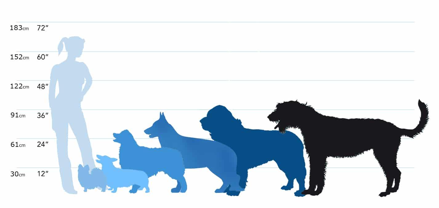 Породы собак: 170 фото характеристик и описаний стандартов больших, средних и маленьких пород