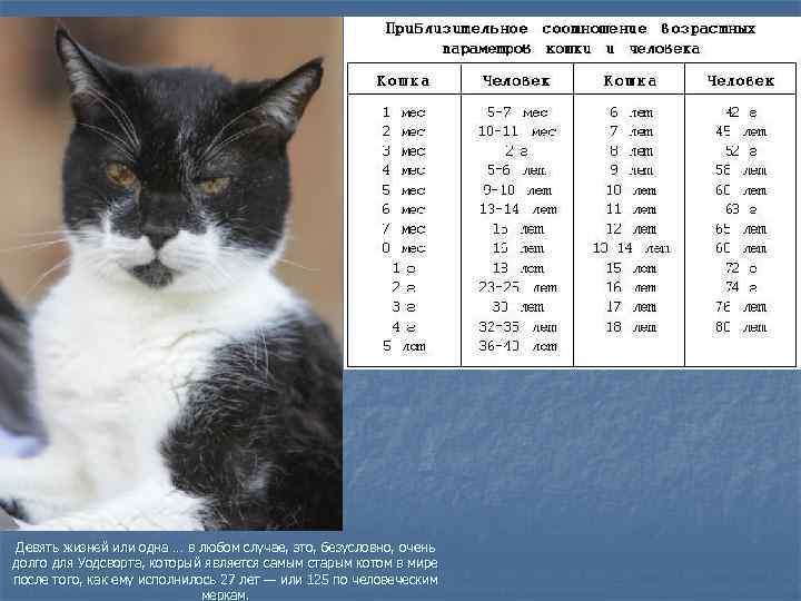 Возраст кошки по человеческим меркам: методы определения