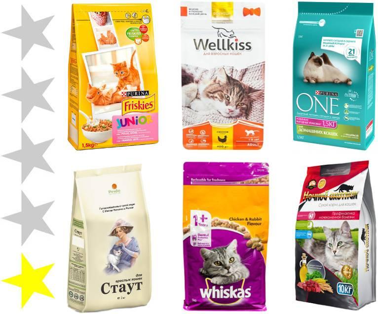 10 лучших кормов для котят - рейтинг 2021 года (топ на январь)