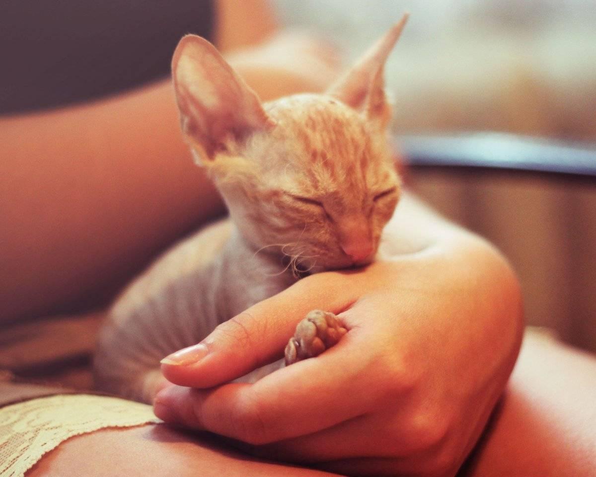 Почему кошка лижет руки человека | лицо хозяина