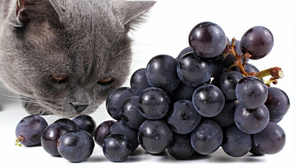 С помощью какого запаха можно отпугивать кошек?