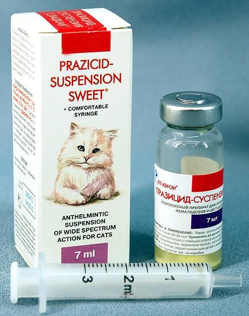У кошки понос – возможные причины, последствия и способы лечения.