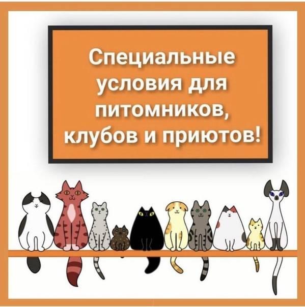 Как это работает: заводчик породистых кошек