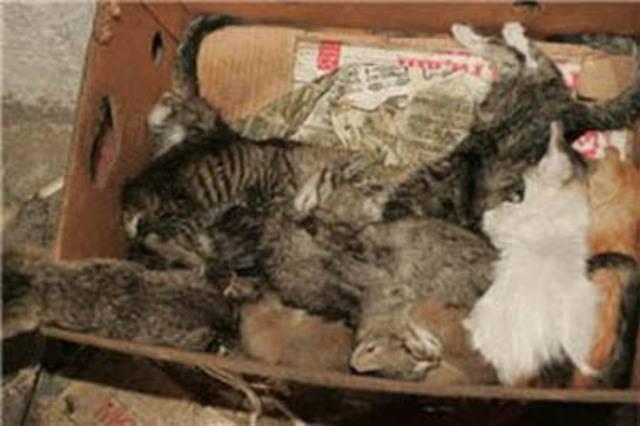 Бизнес на разведении кошек: с чего начать, выбор породы, приобретение котят, реклама