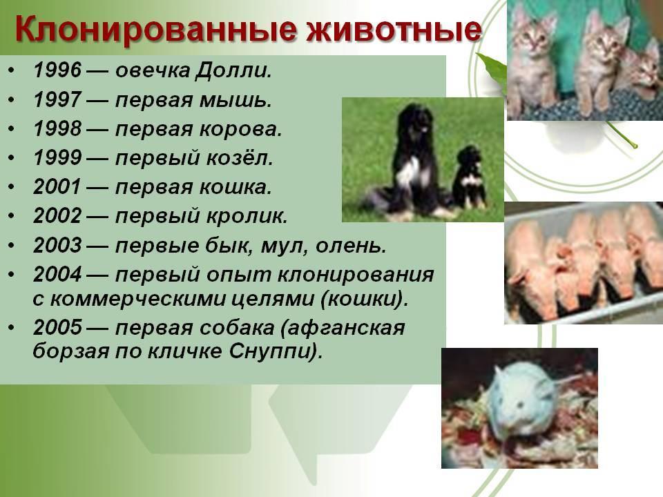 Клонирование животных и растений — вики
