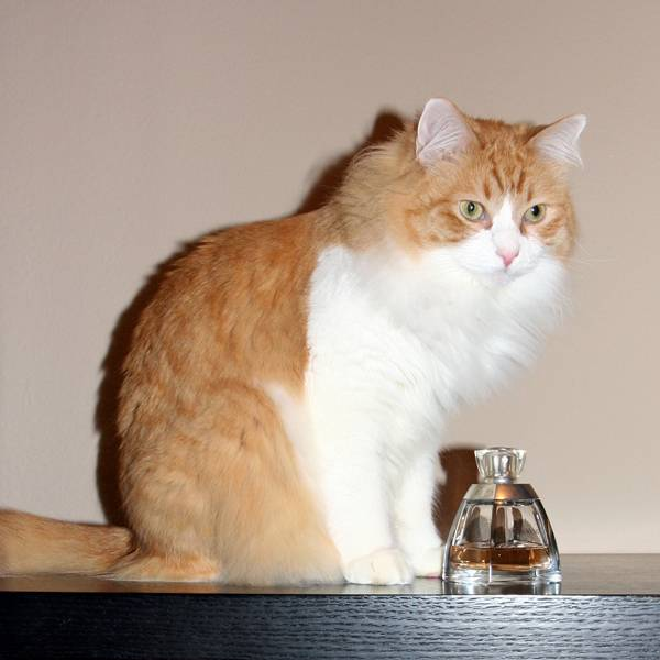 Какие запахи не любят кошки? 5 ароматов, которых кошки просто ненавидят