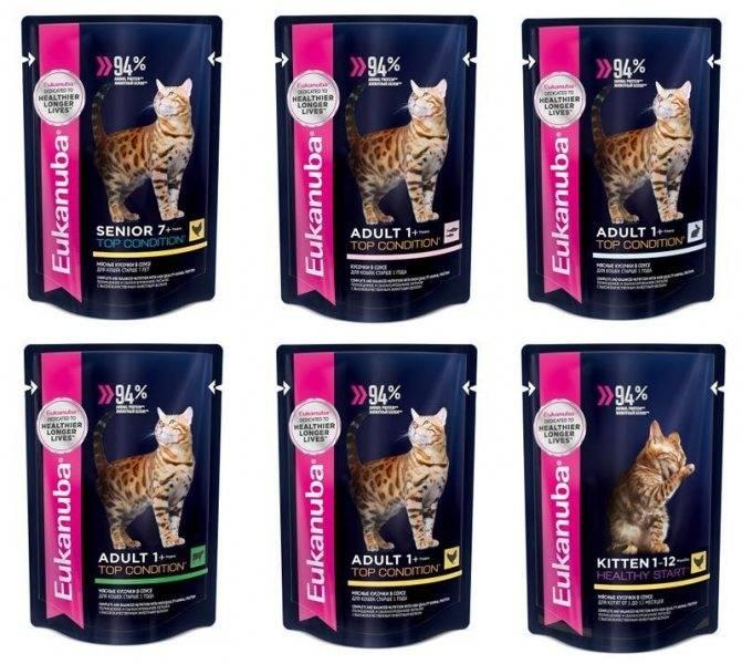 Корм для кошек eukanuba (эукануба): виды, состав, отзывы