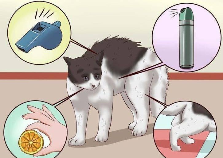 Как отучить собаку метить