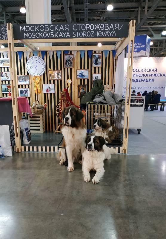 International dog show cacib – fci / интернациональная выставка собак (cacib – fci) гран при «петербург - элита 2021»