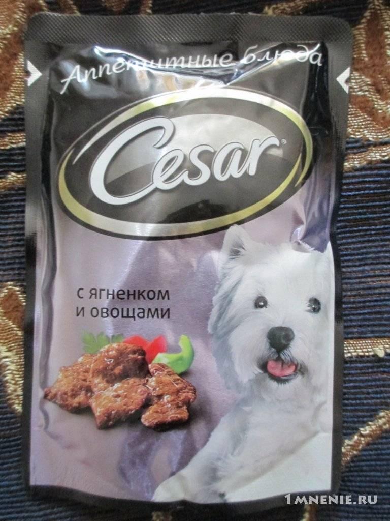 Корм цезарь для собак: отзывы и обзор состава