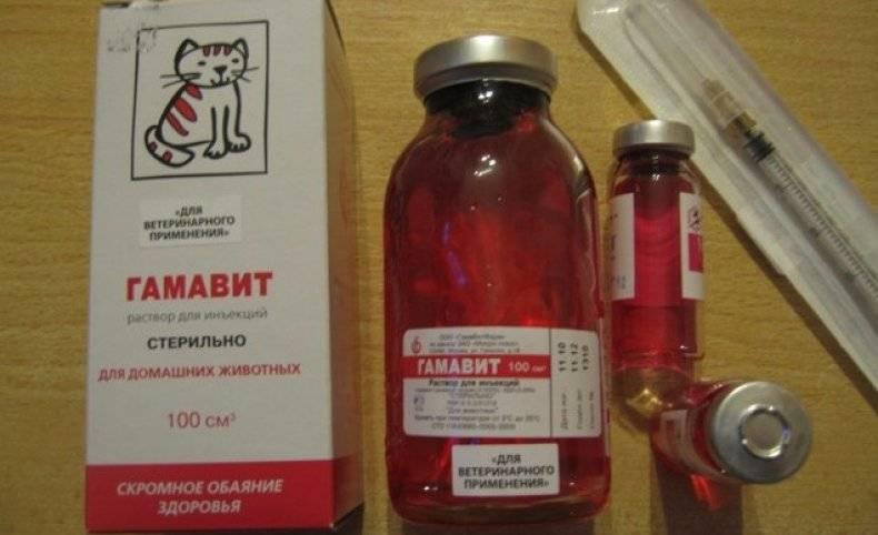 Обзор препарата гамавит для кошек