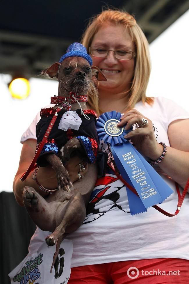 10 самых страшных пород собак в мире (фото)