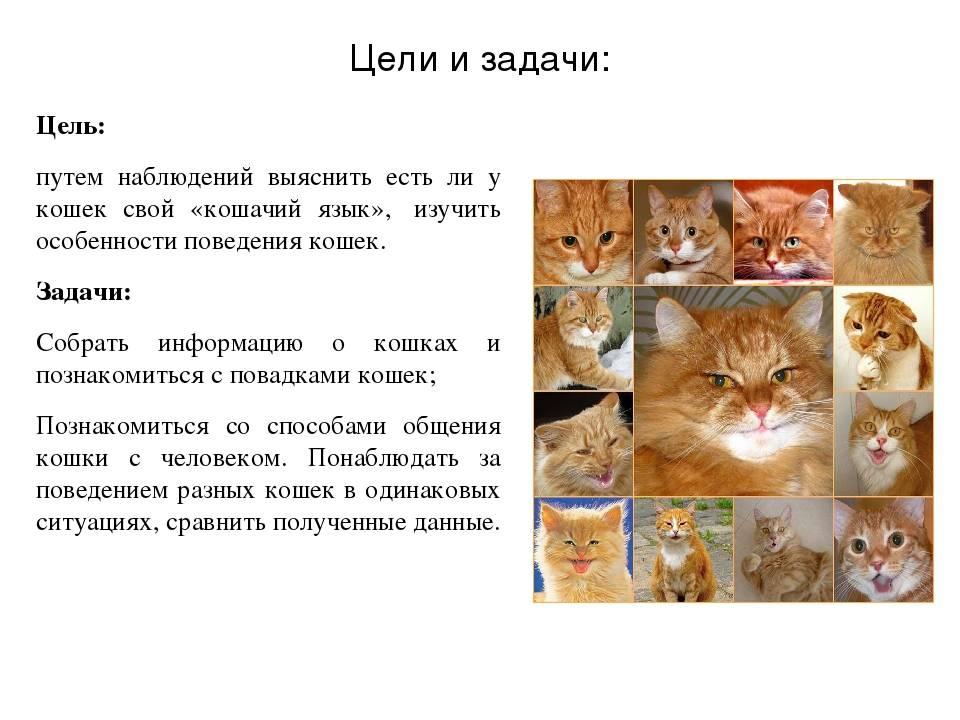 Анатолийская кошка: особенности внешнего вида породы, уход и содержание кота, характер и повадки, разведение питомцев, отзывы владельцев