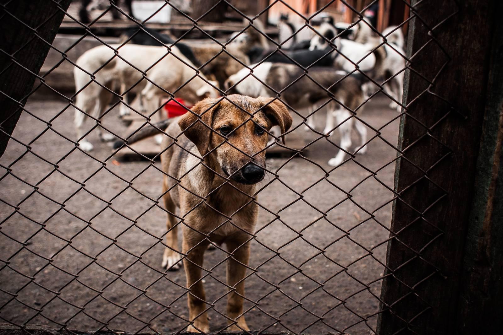 Усыплять или отпускать: в госдуме и оп решают проблему бродячих собак // нтв.ru