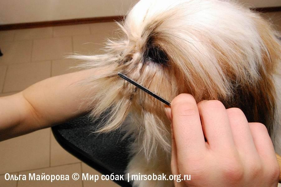 Зачем собакам усы и можно ли их постригать?