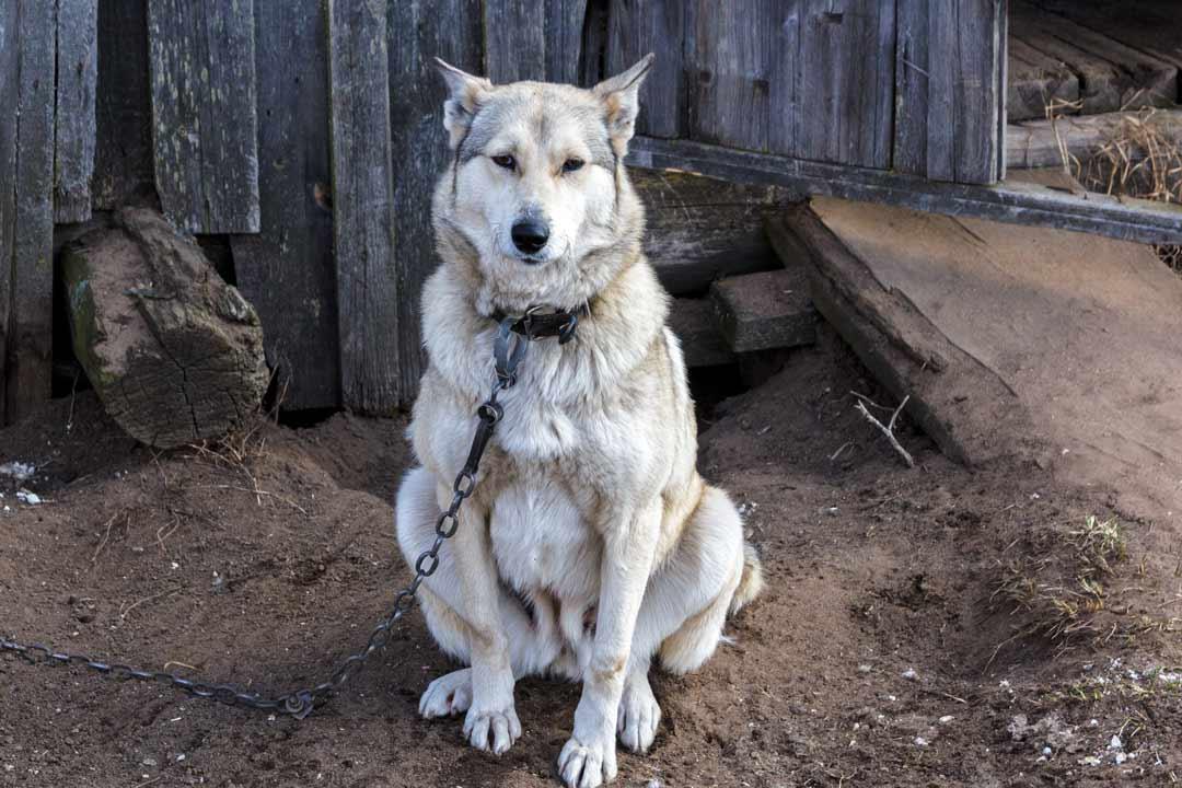 Почему собака воет: причины и методы воздействия на питомца