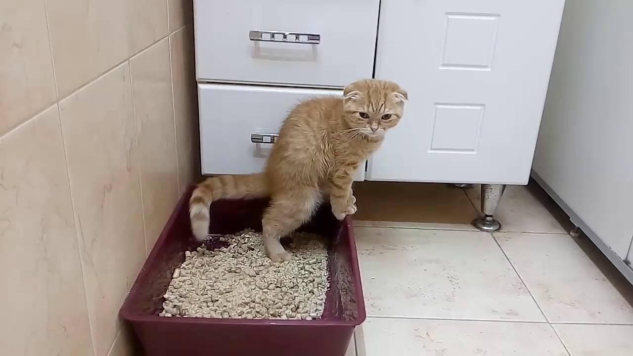 Кошка начала ходить в туалет в неположенном месте
