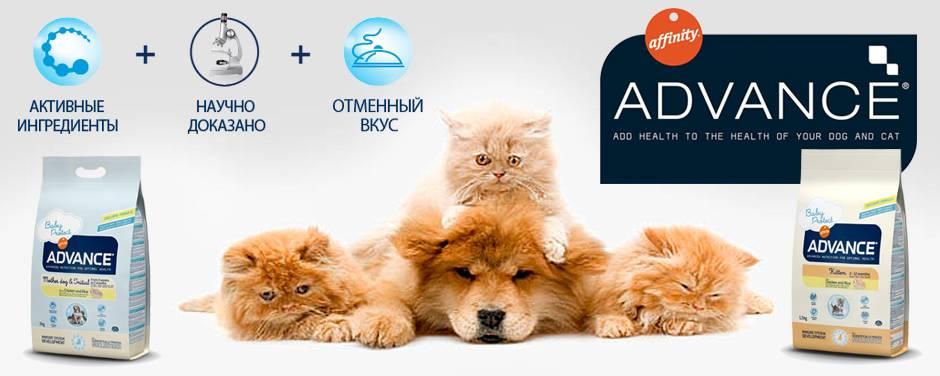 Корм адванс для кошек