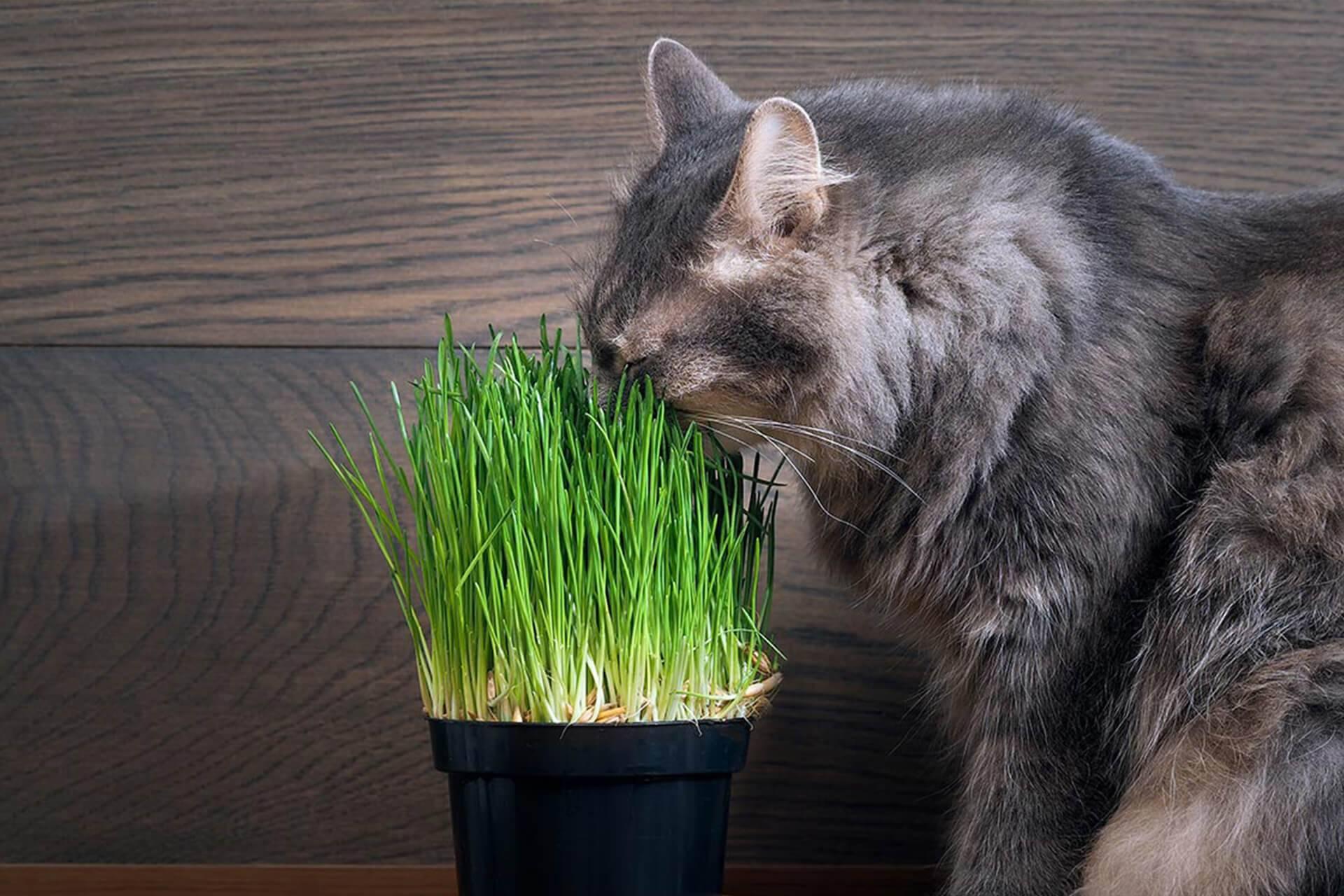 Почему кошки едят траву
