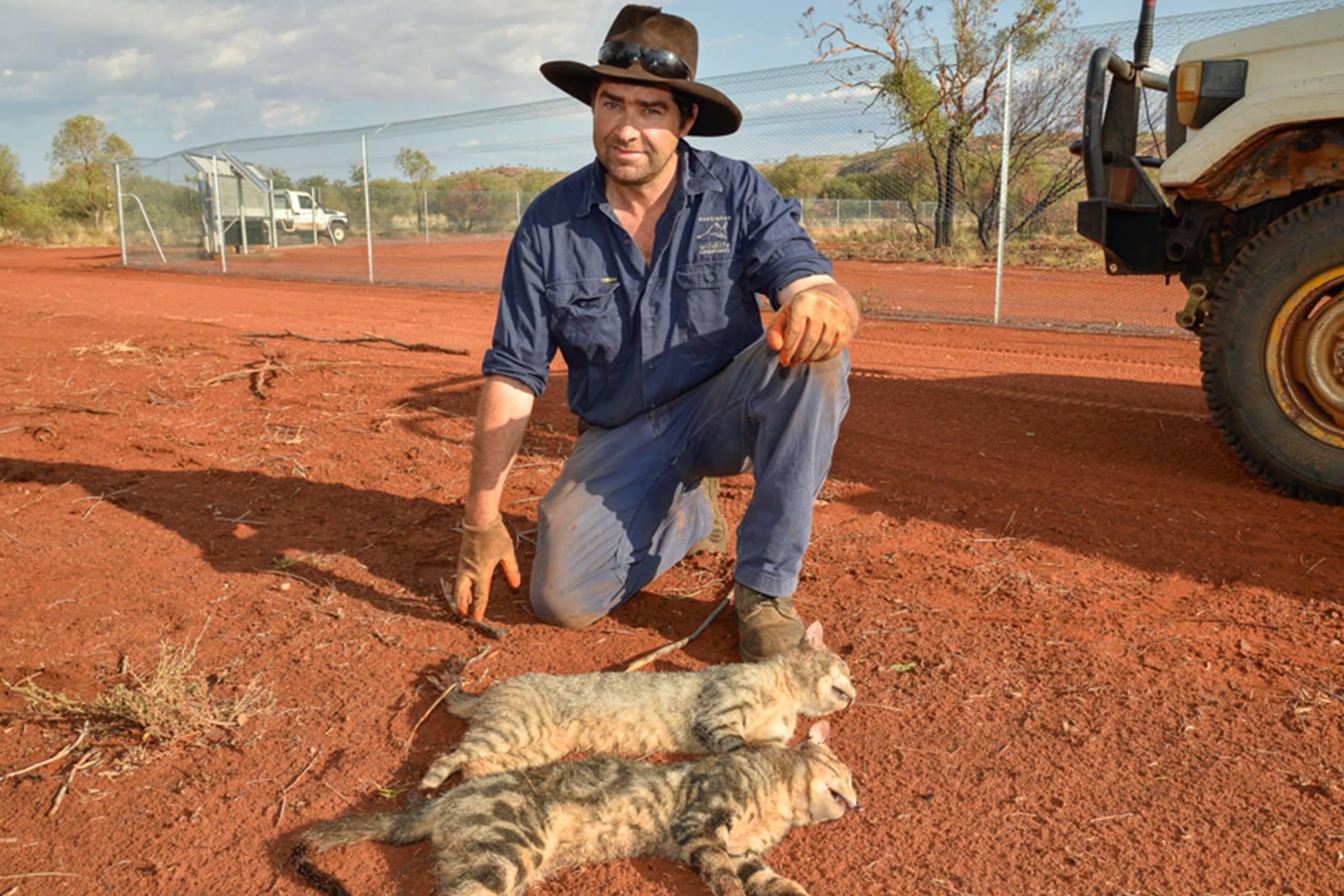 Сумчатые животные в австралии